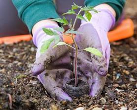 Indicadores de beneficios sociales ambientales económicos de las arborizaciones